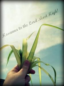 Hosanna palms
